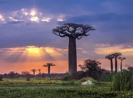 Projects Abroad馬達加斯加