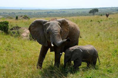 非洲埃塞俄比亞國家公園裡兩頭大象