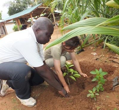 非洲多哥本地農夫幫助Projects Abroad農業耕作項目志工種植橘子樹