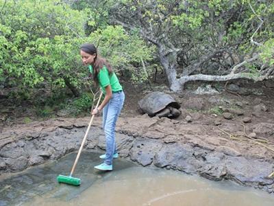 志工在加拉帕戈斯群島的龜類繁殖中心工作