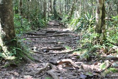 Projects Abroad員工深入馬達加斯加的雨林觀察當地的野生物種