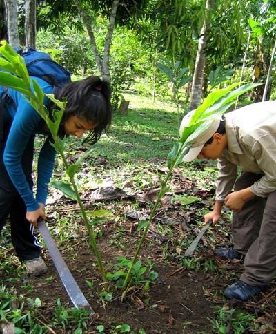 間隔年志工參與秘魯環境保護項目,在熱帶雨林裡工作