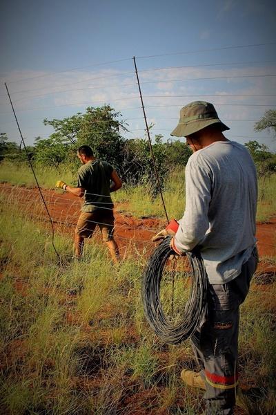 Projects Abroad環保項目志工移走護欄網,這些護欄網威脅南非及博茨瓦納的野生生態