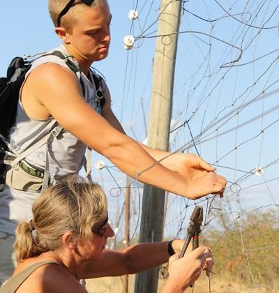 南非環保項目志工檢查一棵野生樹木