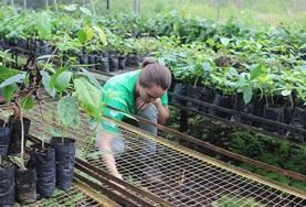 國際志工 環境保護項目