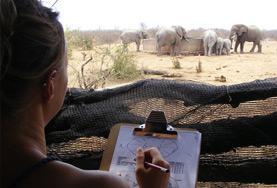 非洲灌木林環境保護項目
