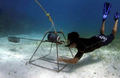Projects Abroad國際鯊魚保育項目