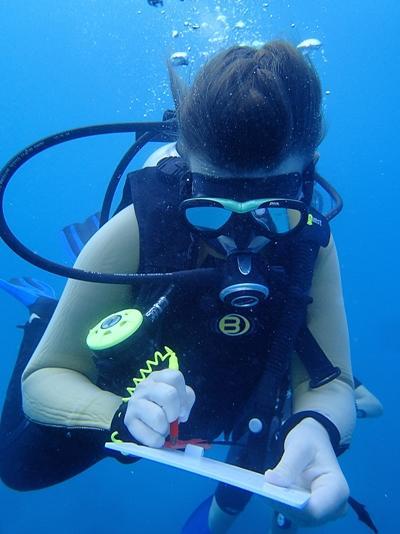 斐濟環保志工在海底觀察生態並進行記錄