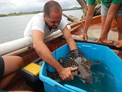 鯊魚保育項目志工在斐濟進行研究