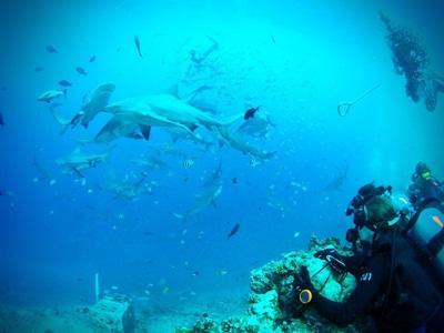 志工與斐濟鯊魚保育項目進行生態觀察潛水工作