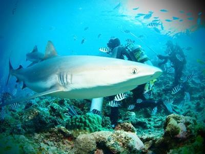 參與斐濟鯊魚保育項目的志工探索鯊魚礁