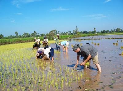 志工與柬埔寨當地民眾一起種植大米
