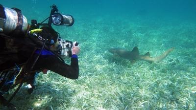 潛水員在貝墨斯堡礁進行海洋生態普查,拍攝鯊魚的活動情況