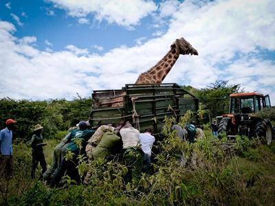 環保志工跳上吉普車進行野生動物觀賞活動,參與肯雅非洲稀樹草原環保項目