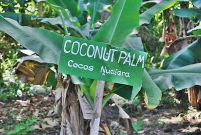 志工在牙買加閱讀指示牌學會當地的土話