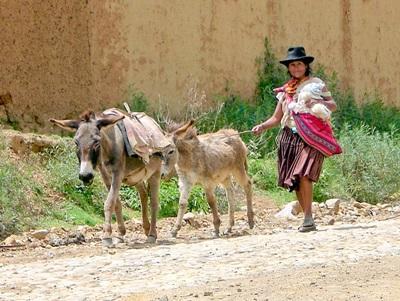 玻利維亞婦女走在她的一雙驢子旁邊