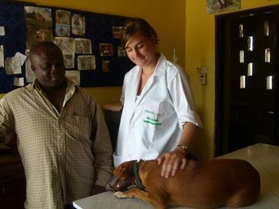 加納的獸醫實習項目