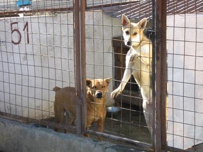 志工參與羅馬尼亞動物關愛項目照顧患病的狗隻