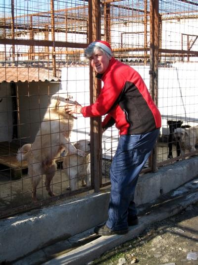 志工在羅馬尼亞照顧籠中的狗隻
