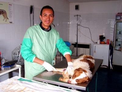 羅馬尼亞的獸醫實習項目