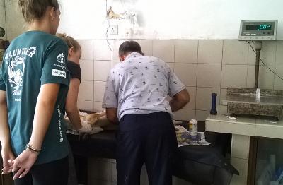 Projects Abroad獸醫項目實習生在動物診所觀摩斯里蘭卡的獸醫治療受傷犬隻的過程