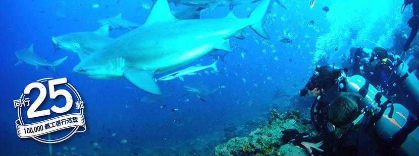 志工參與國際環境保護項目在水底進行生態普查