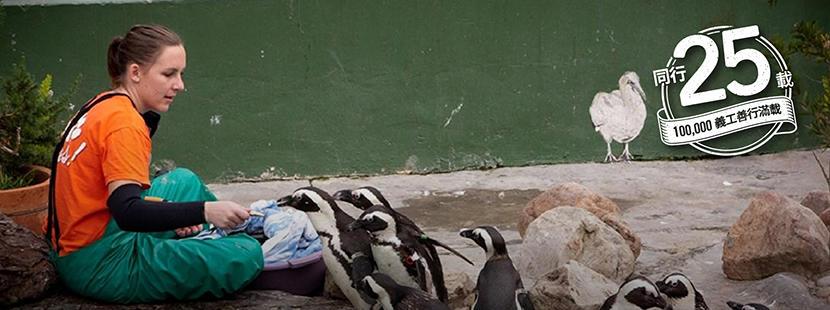 志工在國外的動物中心幫忙照顧企鵝
