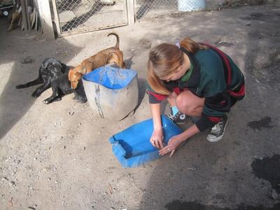 在阿根廷動物關愛志工項目協助犬隻庇護所的日常維護工作