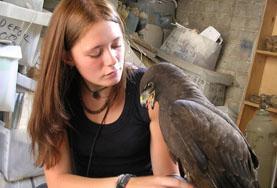 獸醫及動物關愛