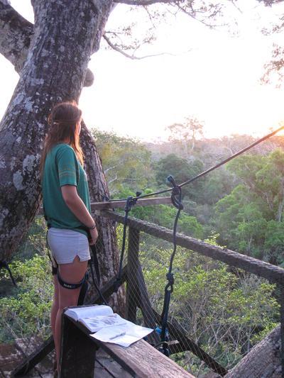 在秘魯亞馬遜叢林的樹冠觀察野生動物的日常習性