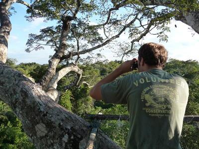 參加秘魯環保復活節志工營,在亞馬遜雨林最高的樹冠上觀察野生動植物